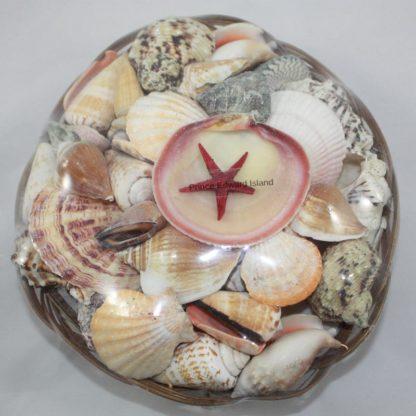 PEI Shell in Basket Medium