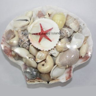 PEI Shell in Shell